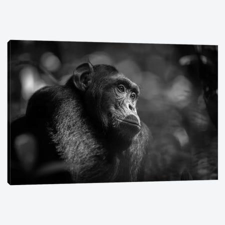 Chimpanzee Black And White Canvas Print #MOG20} by Mogens Trolle Art Print