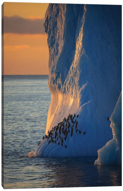 Chinstrap Penguins On Iceberg Tower Antarctica Canvas Art Print