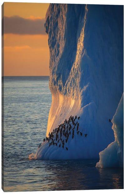 Chinstrap Penguins On Iceberg Tower Antarctica Canvas Art Print