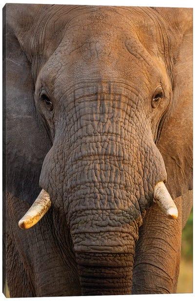 Elephant Close Up Canvas Art Print
