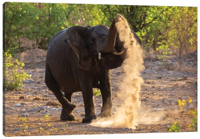 Elephant Dust Bathing Etosha Canvas Art Print