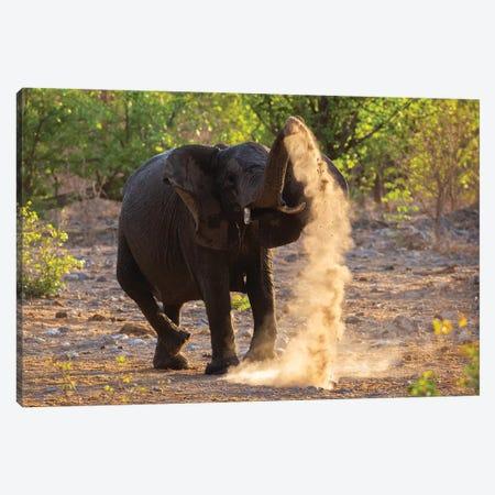 Elephant Dust Bathing Etosha Canvas Print #MOG27} by Mogens Trolle Canvas Artwork