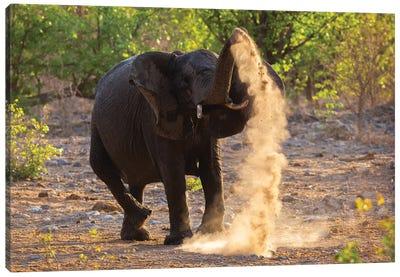 Elephant Dust Bathing Etosha Canvas Art Print