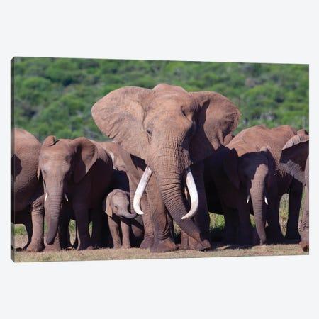 Elephant Tusker 3-Piece Canvas #MOG29} by Mogens Trolle Art Print