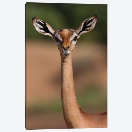 Gerenuk Giraffe Necked Antelope Canvas Print #MOG36} by Mogens Trolle Canvas Art Print