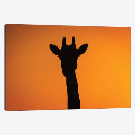 Giraffe Sunset Silhouette Okavango Canvas Print #MOG45} by Mogens Trolle Canvas Wall Art