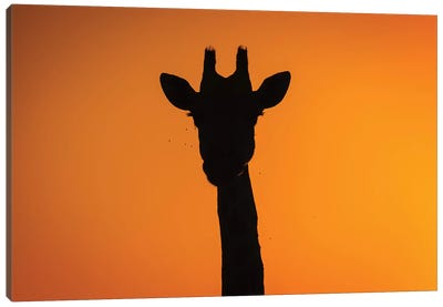 Giraffe Sunset Silhouette Okavango Canvas Art Print