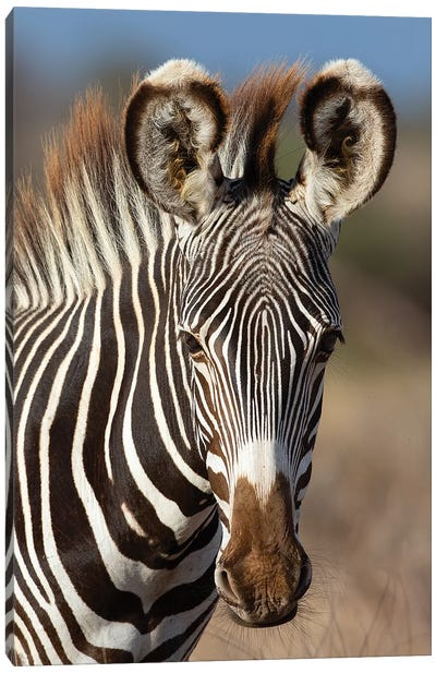 Grevy Zebra Portrait Canvas Art Print