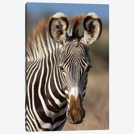 Grevy Zebra Portrait Canvas Print #MOG52} by Mogens Trolle Canvas Artwork