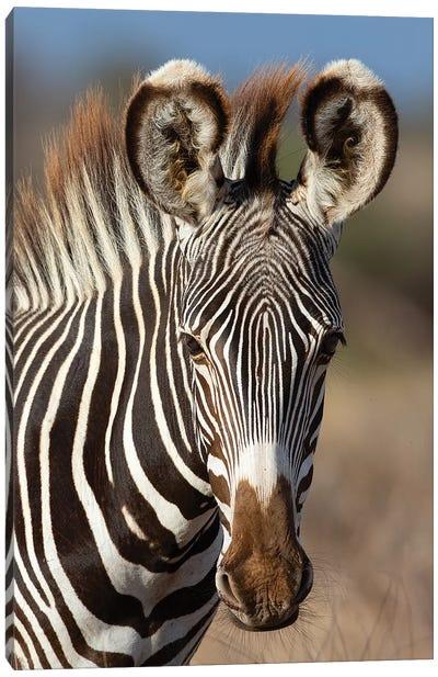 Grevy Zebra Portrait Canvas Art Print