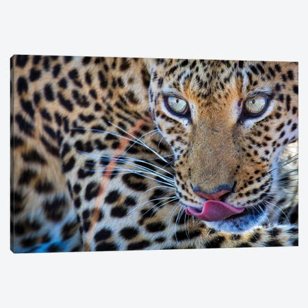 Leopard Bloodshot Eyes Canvas Print #MOG64} by Mogens Trolle Canvas Artwork