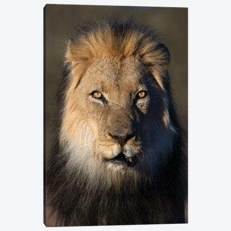 Lion Black Maned Canvas Print #MOG65} by Mogens Trolle Canvas Art