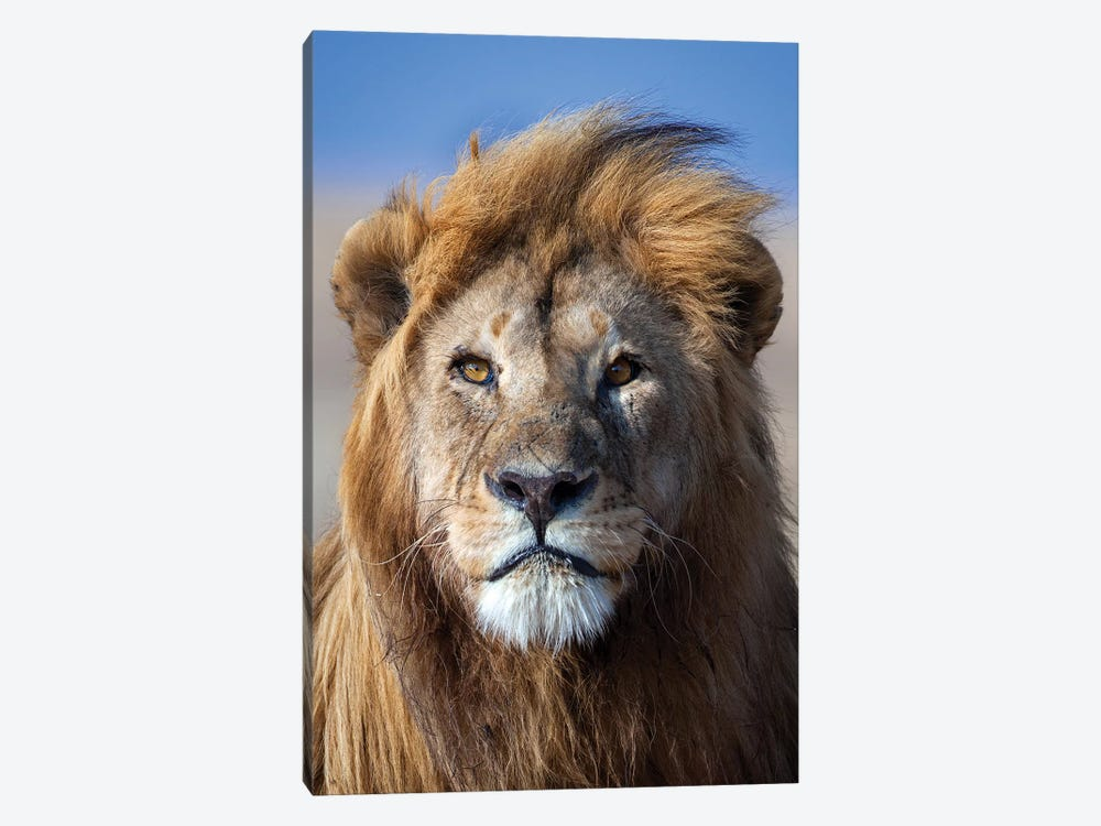 Lion Goldenmane by Mogens Trolle 1-piece Art Print