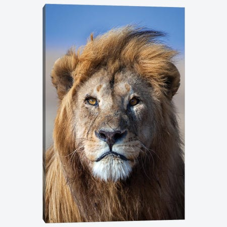 Lion Goldenmane Canvas Print #MOG66} by Mogens Trolle Canvas Art