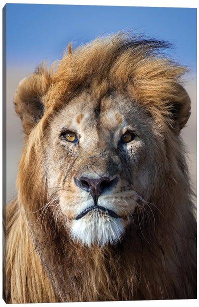 Lion Goldenmane Canvas Art Print