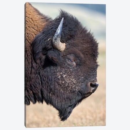 Bison Bull Profile Grand Teton Canvas Print #MOG9} by Mogens Trolle Canvas Art