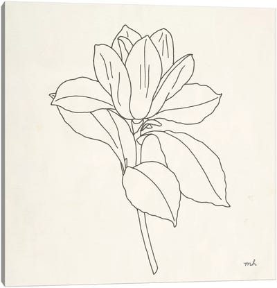 Magnolia Line Drawing II Canvas Art Print