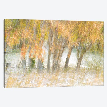 Motion Trees #1 Canvas Print #MOL102} by Moises Levy Canvas Art Print