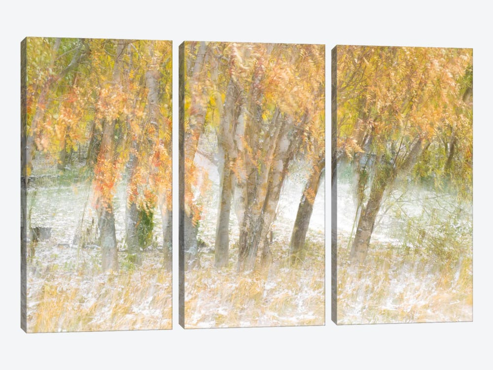 Motion Trees #1 by Moises Levy 3-piece Canvas Art