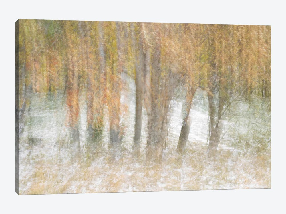 Motion Trees #2 by Moises Levy 1-piece Art Print