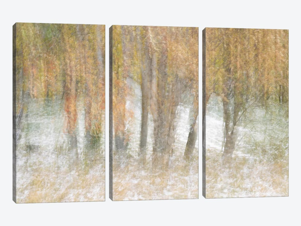 Motion Trees #2 by Moises Levy 3-piece Art Print