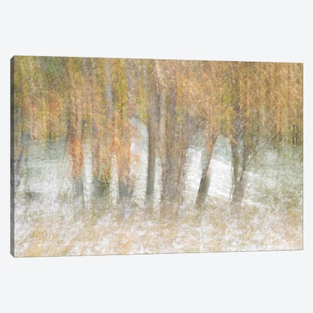 Motion Trees #2 Canvas Print #MOL103} by Moises Levy Art Print