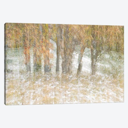 Motion Trees #3 Canvas Print #MOL104} by Moises Levy Canvas Artwork