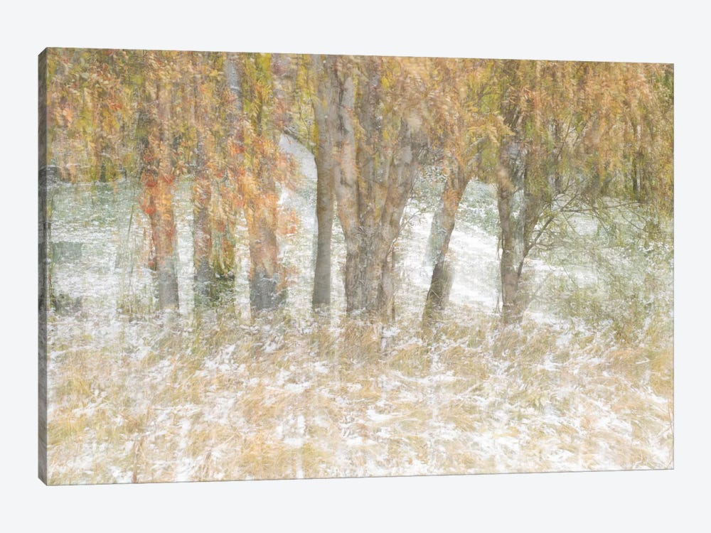 Motion Trees #3 by Moises Levy 1-piece Canvas Wall Art