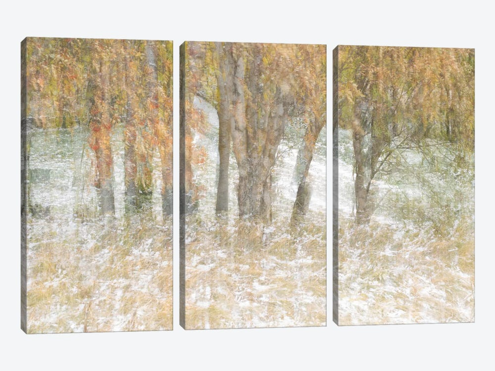 Motion Trees #3 by Moises Levy 3-piece Canvas Wall Art