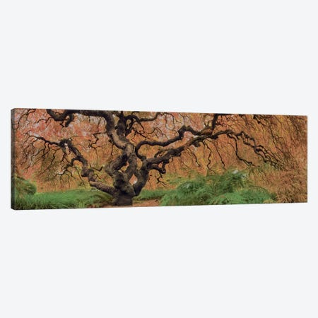 Old Maple Color Canvas Print #MOL106} by Moises Levy Canvas Wall Art