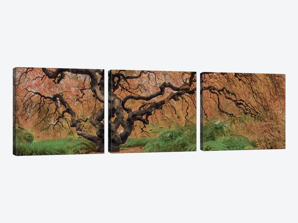 Old Maple Color by Moises Levy 3-piece Canvas Art