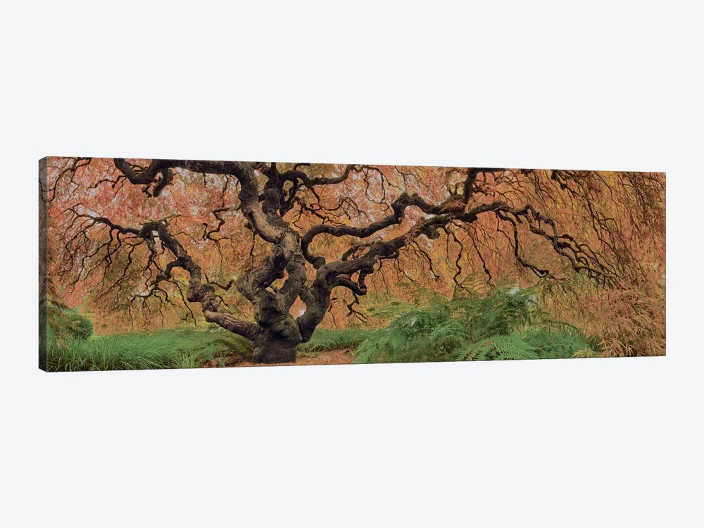 Old Maple Color by Moises Levy 1-piece Canvas Art