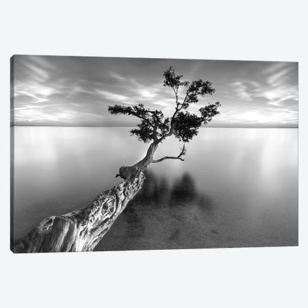 Water Tree XIII Canvas Print #MOL10} by Moises Levy Canvas Print