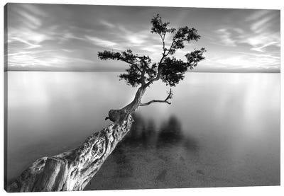 Water Tree XIII Canvas Print #MOL10