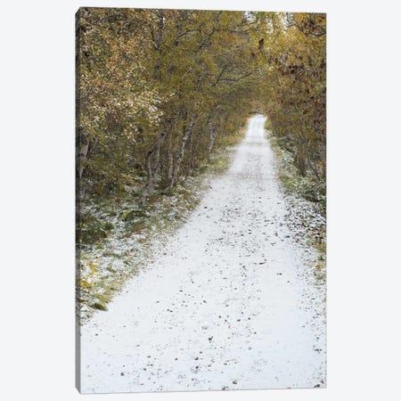 Snow Way #3 Canvas Print #MOL111} by Moises Levy Canvas Artwork