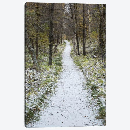 Snow Way #4 Canvas Print #MOL112} by Moises Levy Canvas Wall Art
