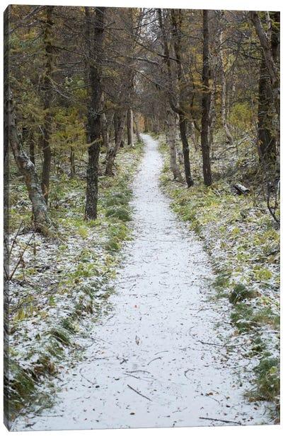 Snow Way #4 Canvas Print #MOL112