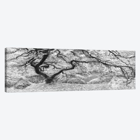 The Tree Final B&W Canvas Print #MOL114} by Moises Levy Canvas Print