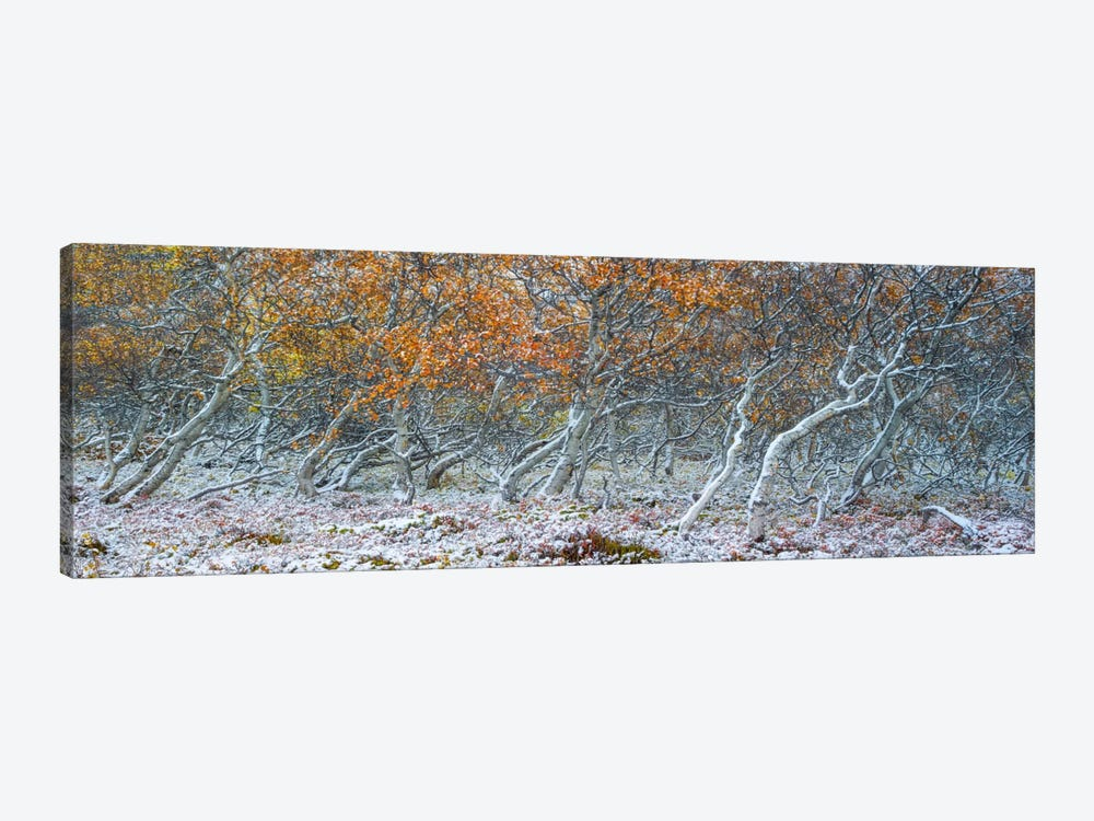 Tired Trees #1 by Moises Levy 1-piece Canvas Wall Art