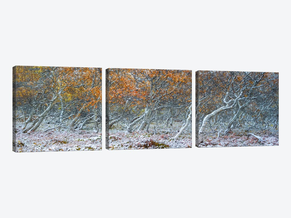 Tired Trees #1 by Moises Levy 3-piece Canvas Artwork