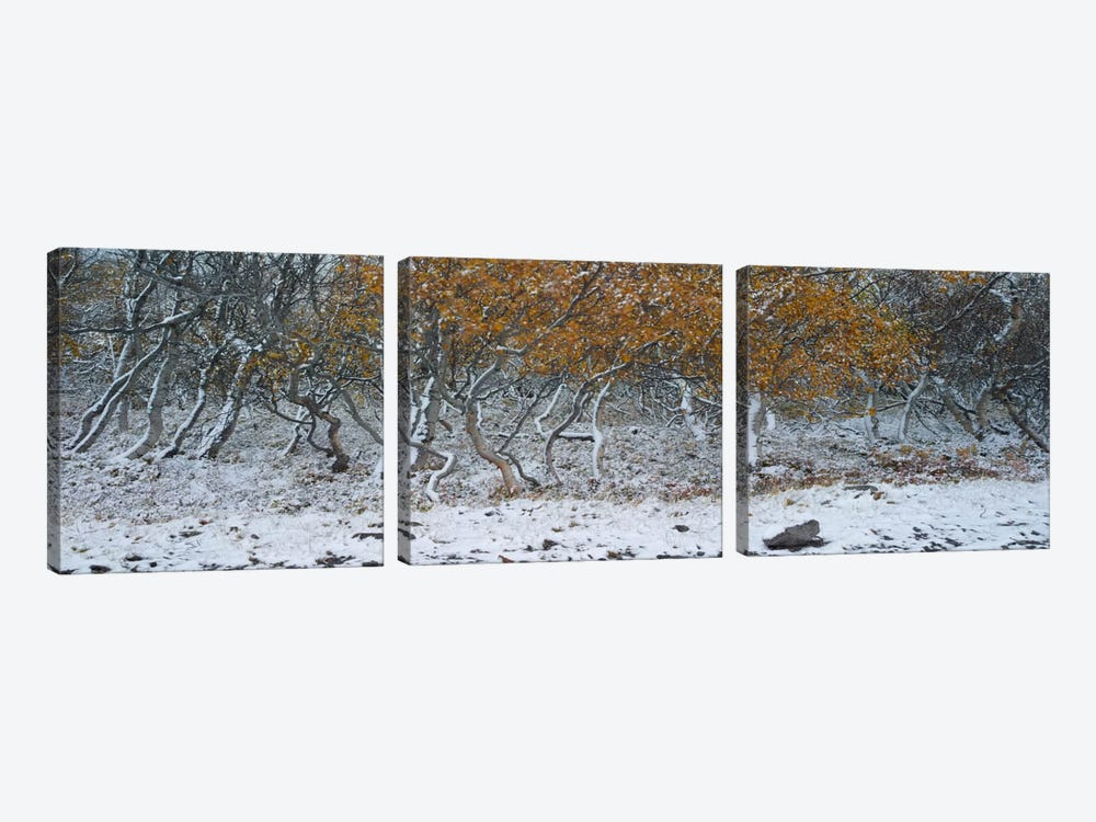 Tired Trees #2 by Moises Levy 3-piece Canvas Art Print