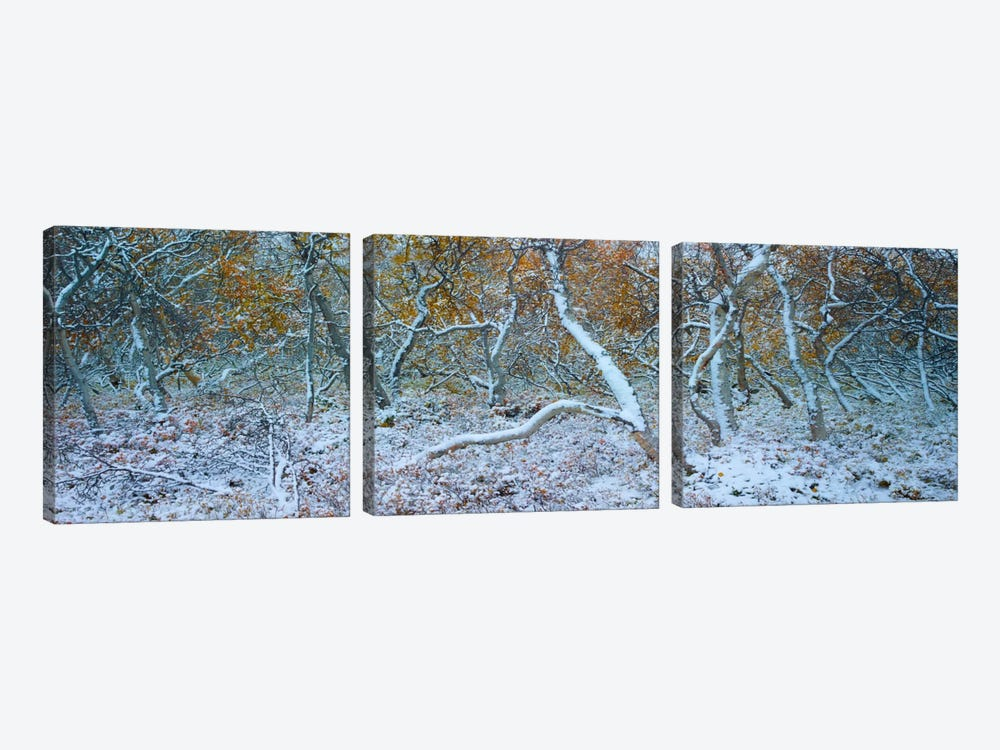 Tired Trees #3 by Moises Levy 3-piece Canvas Artwork