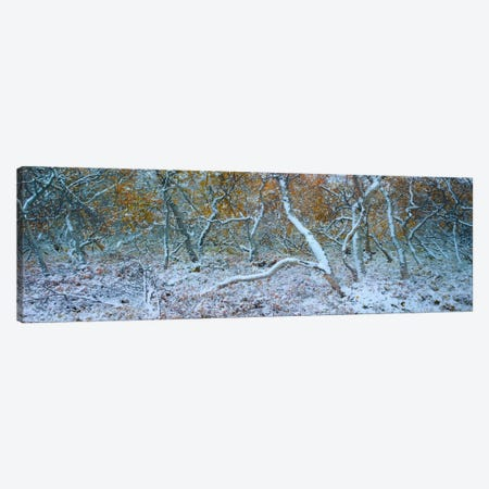 Tired Trees #3 3-Piece Canvas #MOL117} by Moises Levy Art Print
