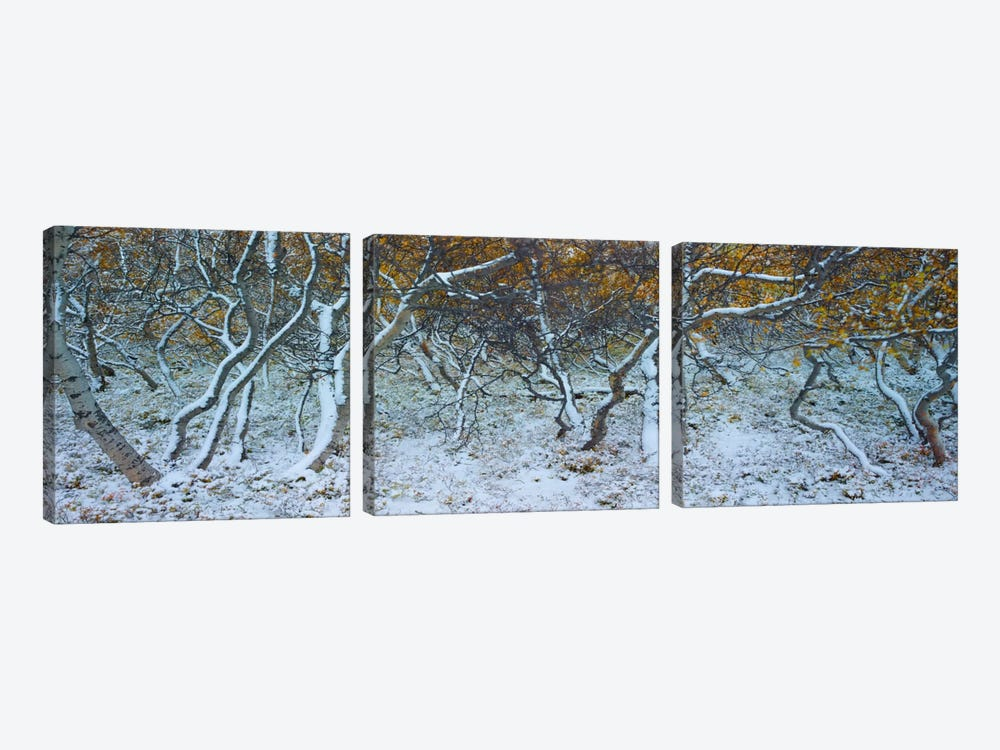 Tired Trees #4 by Moises Levy 3-piece Canvas Print