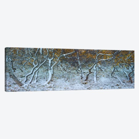 Tired Trees #4 Canvas Print #MOL118} by Moises Levy Canvas Wall Art