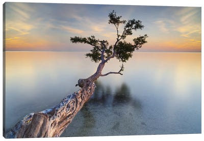 Water Tree XIV Canvas Art Print