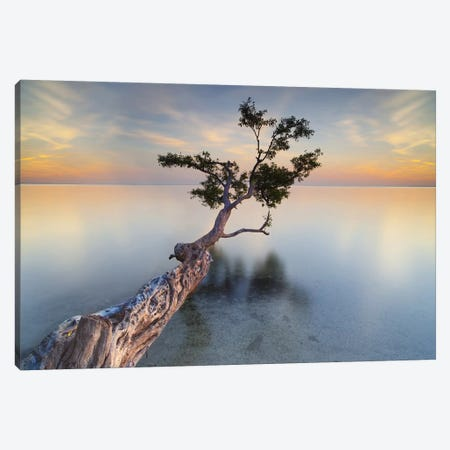 Water Tree XIV Canvas Print #MOL11} by Moises Levy Art Print