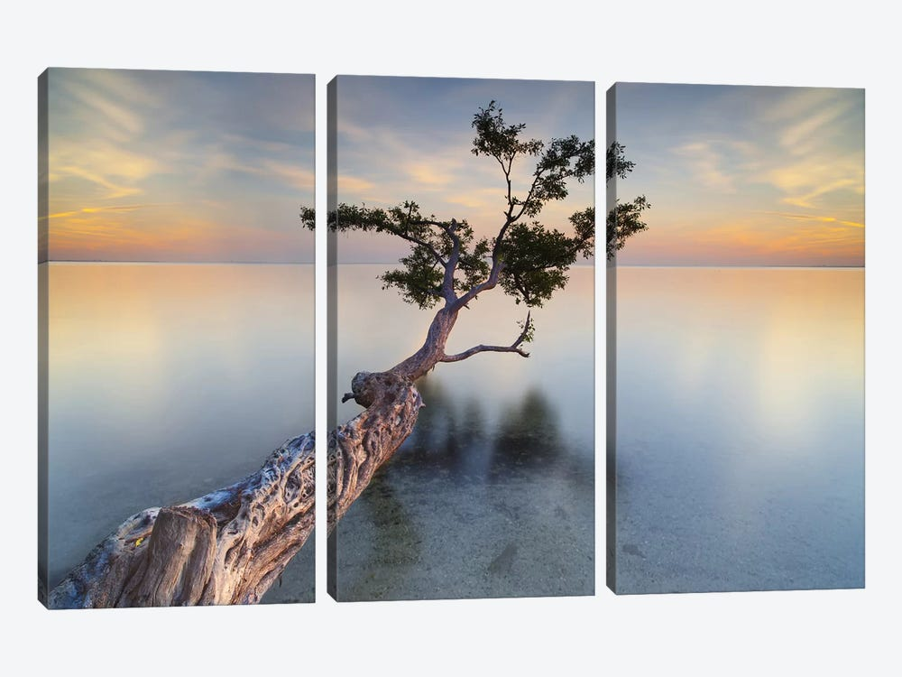 Water Tree XIV by Moises Levy 3-piece Canvas Artwork