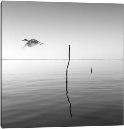 Fly Canvas Print #MOL121