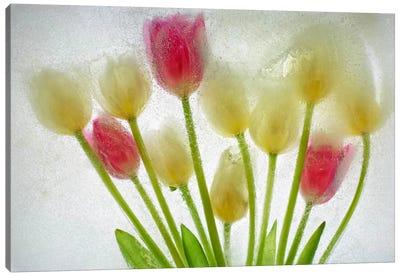 Flores Congeladas #603  Canvas Art Print